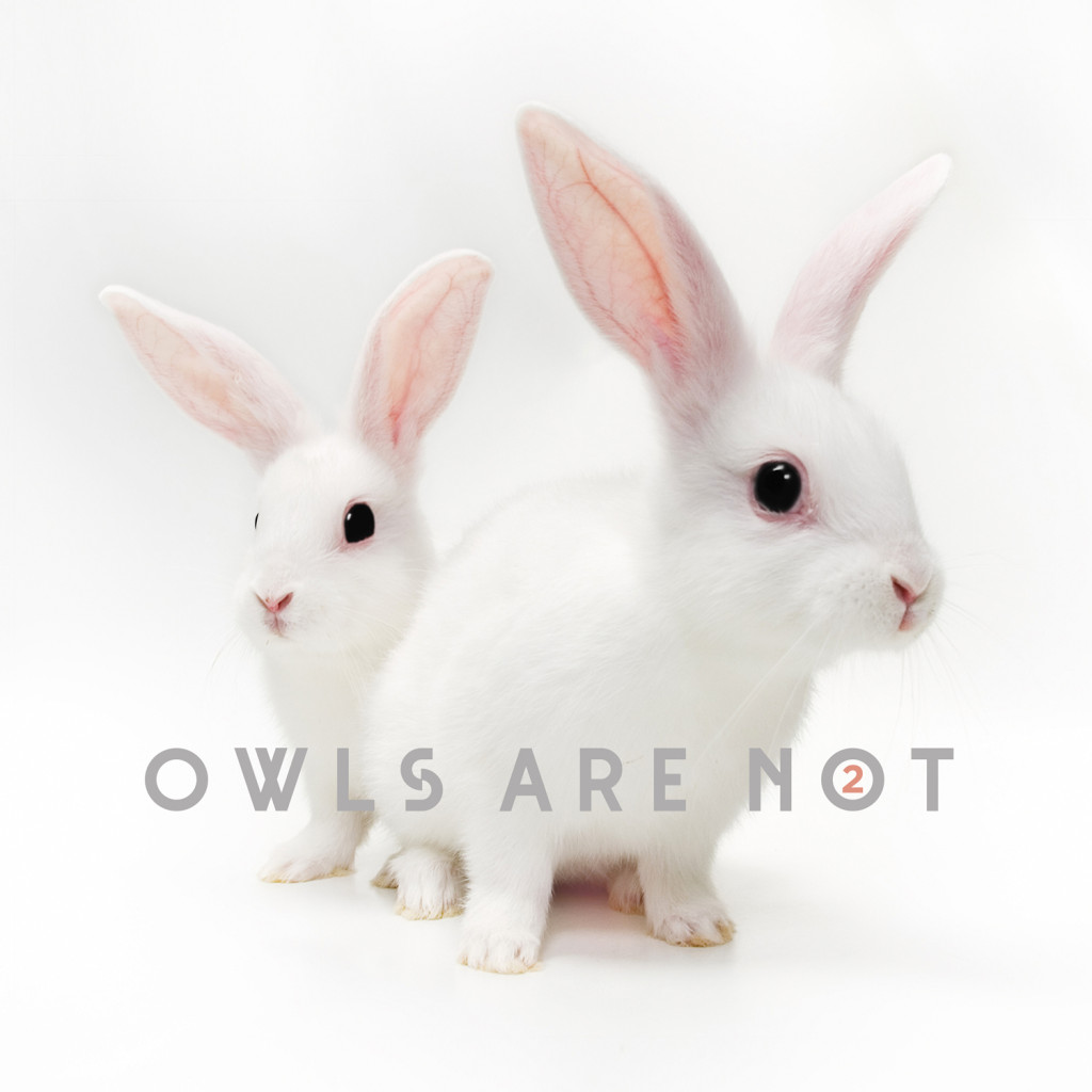 Owls Are Not